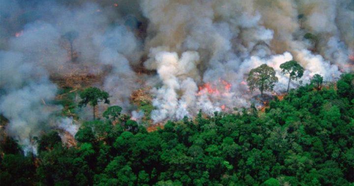"""""""Amazońskie lasy są NIEPALNE"""" Wiadomo JAK doszło do pożarów?!"""