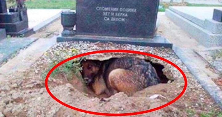Pies odwiedzał GRÓB mężczyzny. NIE chodziło o pamięć o właścicielu!
