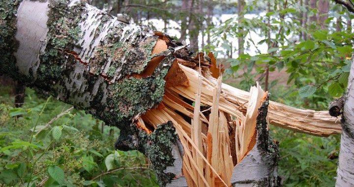 """HURAGAN nad Polską! """"ZERWANE dachy, połamane drzewa"""""""