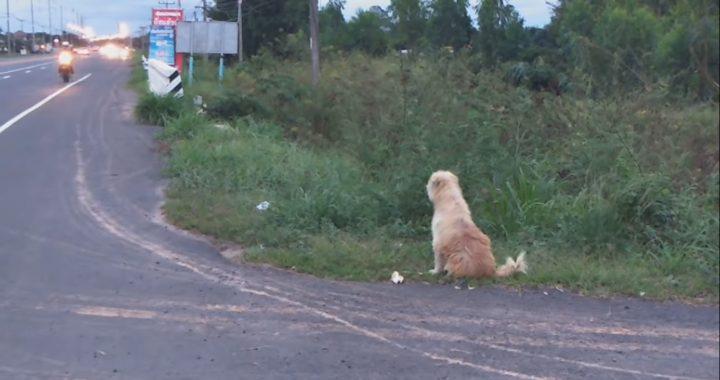 Pies przez cztery lata codziennie czekał przy drodze na swojego właściciela! Koniec tej historii jest (…)!