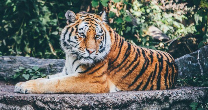 2-letni chłopiec zmarł kilka dni po wizycie w zoo! Kiedy rodzice dowiedzieli się co go zabiło byli zszokowani!
