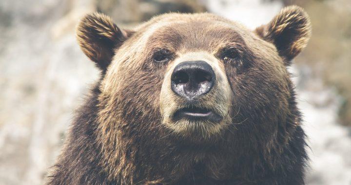 Niedźwiedź połamał go i przez miesiąc więził w swojej jamie! Mężczyzna przeżył, bo (…)!