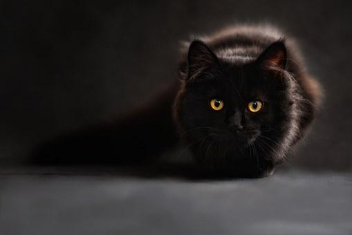 Czy spanie z kotem jest dobrym pomysłem? Wyniki badań zaskakują!