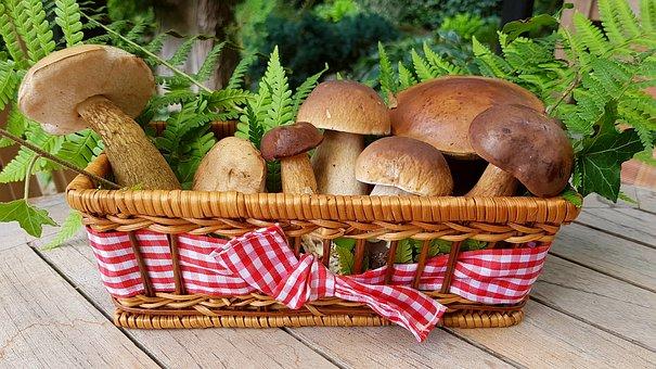Są źródłem potasu i fosforu! Dietetycy zalecają jakie grzyby warto jeść dla zdrowia!