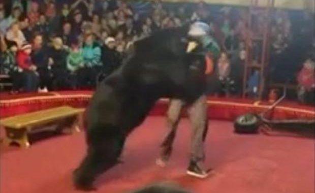 Niedźwiedź nie wytrzymał i zaatakował tresera w cyrku! Wszystkiemu przyglądali się…