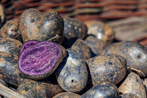 Fioletowe ziemniaki CHRONIĄ przed RAKIEM! Są też naturalnym środkiem na…