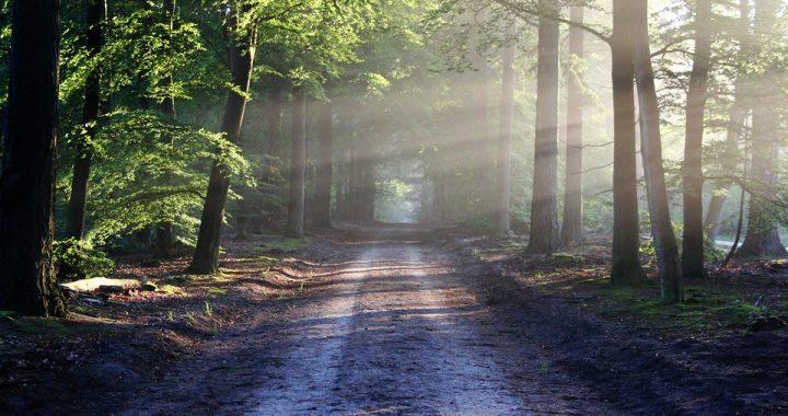 60-latek wybrał się na spacer do lasu! Tam przeżył prawdziwy horror!