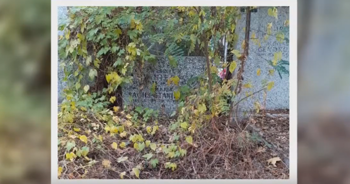 Był legendą polskiego kina. Dziś jego grób jest zniszczony i regularnie zaśmiecany…