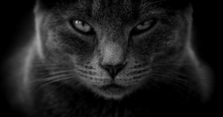 Właściciele kotów są bardziej narażeni na TEN typ RAKA?